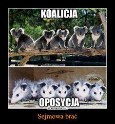 Sejmowa brać – KOALICJA OPOSYCJA Wtf Funny, Funny Memes, Hilarious, Reaction Pictures, Funny Pictures, Polish Memes, Big Hero 6, Zootopia, Sarcastic Humor