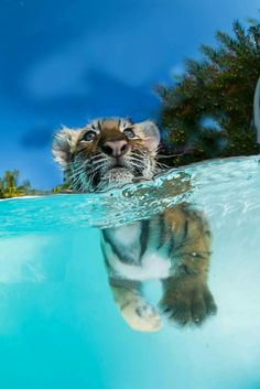 Aww Beautiful Wish my Cats Love Water as much.