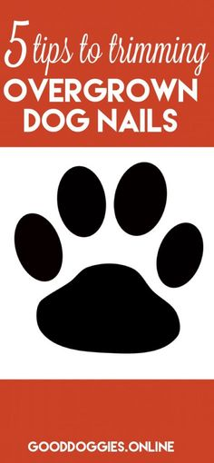 Are you scared of trimming your dog nails? Looking for the best solution to trim your dog's nail? Learn the simple and stress-free solutions on how to trim dog nails that are overgrown. Trimming Dog Nails, Dog Health Tips, Pet Health, Dog Care Tips, Pet Care, Pet Tips, Cesar Millan, Dog Items, Dog Hacks