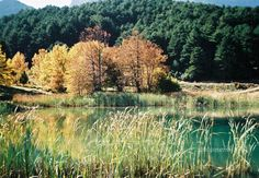 Autumn colors  Fall finds  Nature photo   Photo of a by prosinemi, €15.00