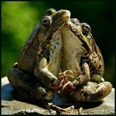 How about these frogs mike. Lol