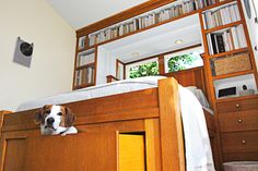 An under-the-bed drawer is a hiding place for suitcases — and pup Stanlee, too!