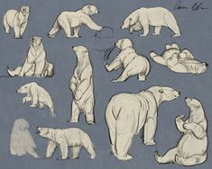 Doing some quick sketch Polar Bear studies. Animal Sketches, Animal Drawings, Art Sketches, Polar Bear Drawing, Polar Bear Illustration, Bear Sketch, Bear Character, Gesture Drawing, Bear Art