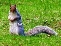 Diary Of A Wild Country Garden: Our Curious Squirrel Visitor