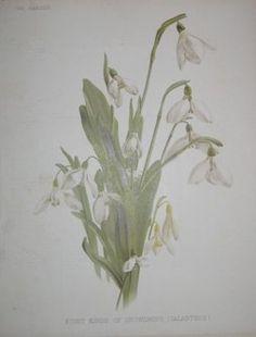 white flowers  no. - 01