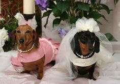 Image result for dogs at weddings