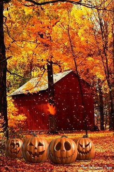 #Autumn scene with pumpkins. Love it! :) https://www.facebook.com/TheHalloweenPage