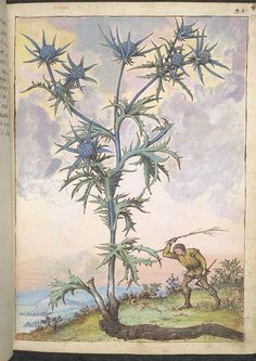 Euphrasia officinalis, from De Materia Medica, a work on herbal medicine by Pedanius Dioscorides, 16th century edition. It depicts a wide range of plants against a backdrop of landscapes, often featuring populated scenes. Watercolour