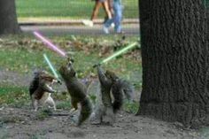 The force is strong with them