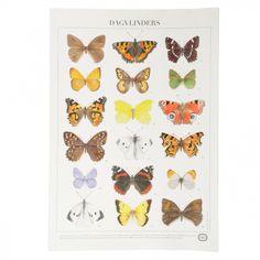 Poster, vlinders, Nederlandstalig €12,95 Dille en Kamille