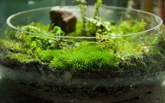 How to grow moss and start a moss garden