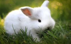 All about animals, Animals that start with r, animals with r, animals beginning with r, amazing animals start with r, Amazing animals, beautiful animals with r, awesome animals in the world Rabbit, amazing rabbit, awesome rabbit, funny rabbit, beautiful rabbit, cute rabbit, lol rabbit, fun rabbit, fascinating rabbit, incredible rabbit, beautiful rabbit in the world #Animalsthatstartwithr  #animalswithr #animalsbeginningwithr #amazing animalsstartwithr #Amazinganimalr #beautifulanimalwithr…