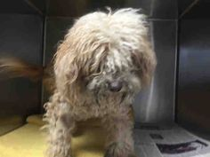 (98) OPCA Shelter Network Alliance added 18 new... - OPCA Shelter Network Alliance Castaic, CA ~ Animal ID #A4911564 L.A. County Animal Care Control: Castaic Shelter *** 11+ Year Old SENIOR ALERT!!! ***... See More