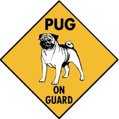 64d7f549b Most of the time people think they re hilarious! A A Pug s bark is worse  than their little bite.