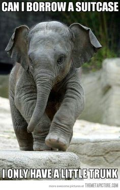 A little trunk…OMG this is the cutest! I love little elephant!