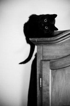 black cat kitty cornered (looks like my kitty Ditty!)