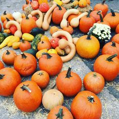 One week till Thanksgiving! Can't wait for all the gourd-eous looking food and all the #pumpkin I can get!  #gobble #gobble