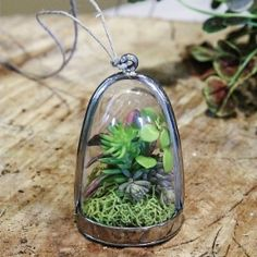 A necklace terrarium and other tips for planting succulents.