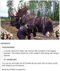 on Canada Even the moose are loyal in Canada, unlike most people in America<< Woud you like some aloe vera for that BURN?Even the moose are loyal in Canada, unlike most people in America<< Woud you like some aloe vera for that BURN? Funny Cute, The Funny, Hilarious, Animals And Pets, Funny Animals, Cute Animals, Tumblr Funny, Funny Memes, Silly Jokes