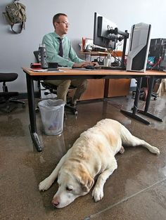 More companies allowing Dogs at work! Citing benefits.