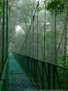 Selvatura Park, Santa Elena, Costa Rica: Suspended Bridges Span Verdant Valleys & Lush Canopies of Mist-Covered Tree Tops thegardenerseden.com  I would really really like to go here.