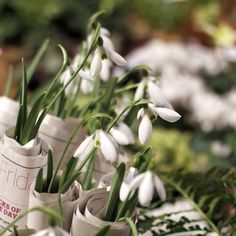 """A new week. I hope you all have some snowdrops in yours."""