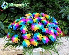 100 UNID Rainbow Semillas de Flores de Crisantemo, Ornamental Bonsai, Color raro, nueva Elegir Más Crisantemo Semillas de Jardín de Flores de Plantas