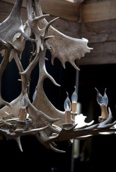 "This 'wild' chandelier is from our feature ""Wintery Manners"""