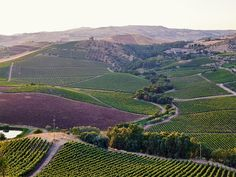 Formerly grain fields, the estate now boasts close to 1,000 acres of vineyards sprawled across southwest-facing slopes. Thanks to the high altitudes and a cool microclimate, grapes are able to ripen slowly—the optimal conditions for producing indigenous red wines like Frappato and Nero d'Avola.