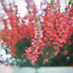 Pic of beautiful flowers taken by me.