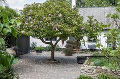 Feng Shui, Aliens, Provence, Magnolia, Greenery, Plants, Provence France, Magnolias