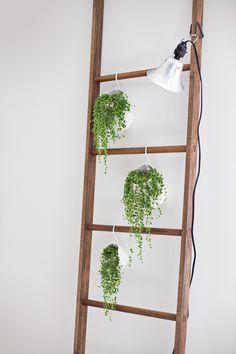 ladder plant display