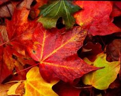 What to Do With Your Fall Leaves | Families.com #Fall #Leaves #Families