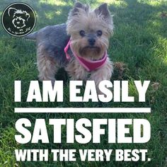 Get it here: https://itsayorkielife.com/yorkies-for-when-only-the-very-best-will-do/
