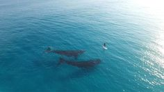 Shot by Jaimen Hudson Paddle Boarding with Whales in Esperance, Western Australia. Filmed in 4K. Shot and put together by me. Instagram: https://instagram.com/jaimenhudson…