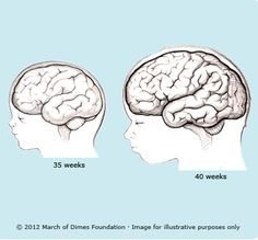 Remarkable, the human brain development newborn to adult join. And