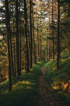 Late afternoon sun on a forest trail (Austria) by Roman Königshofer Beautiful World, Beautiful Places, Beautiful Forest, Beautiful Pictures, Forest Path, Forest Trail, The Forest, Conifer Forest, Nature Aesthetic
