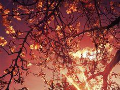 Dark blossom.