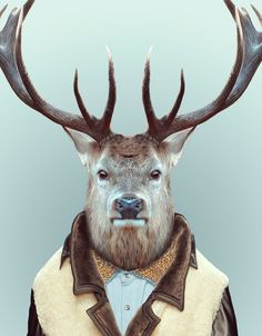 """Washer, requires a bit of a trim. Blik Decal $30, 30"""" x 32"""". Zoo Portraits: Deer"""