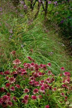 Wife, Mother, Gardener: Stan Hywet's Three-Acre Great Garden ~ Part 1