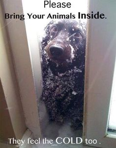 Please Bring Your Animals Inside. They Feel The Cold Too.