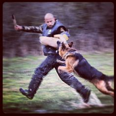 Bite Work ! All police and military dogs neeed TO do periodicly bitework. We have TO test different scenarios on every exersiZe!  The patroldog have a Big currage ;-)