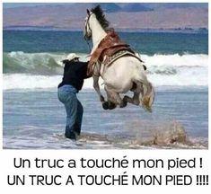 Cute Jokes Make a special photo … Funny Animal Memes, Funny Animal Pictures, Funny Images, Funny Animals, Cute Animals, Funny Humor, Horse Meme, Funny Horses, Horse Horse