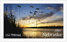 Nebraska photographer Michael Forsberg's work earns recognition for the Platte River and its importance to sandhill cranes.