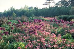 Piet-Oudolf-View-of-Wisley-Garden-Royal-Horticultural-Society-Woking1