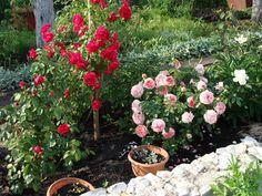 Подкормка для роз, на апрель