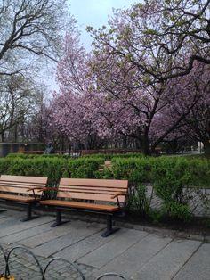 Vårprunkade träd i Göteborg.