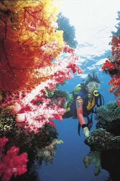 #Colorful reefs while #diving near the Jean-Michel Cousteau Resort #Fiji