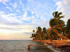 The picturesque shoreline of Long Caye Island