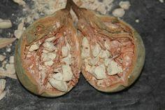 What does Baobab Superfruit taste like? Video Link, Films, Baking, Ethnic Recipes, Food, Movies, Bakken, Essen, Cinema